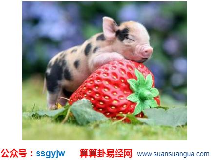 网上算命_属猪女性优势有什么?(图文)